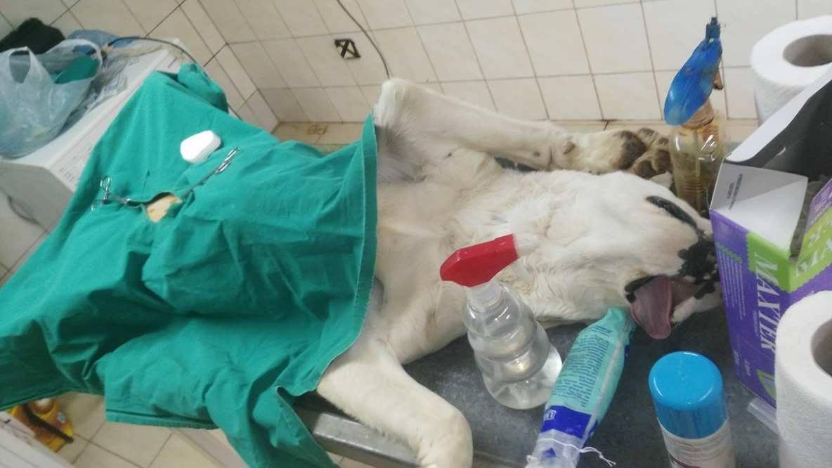 Balina sterilisation2