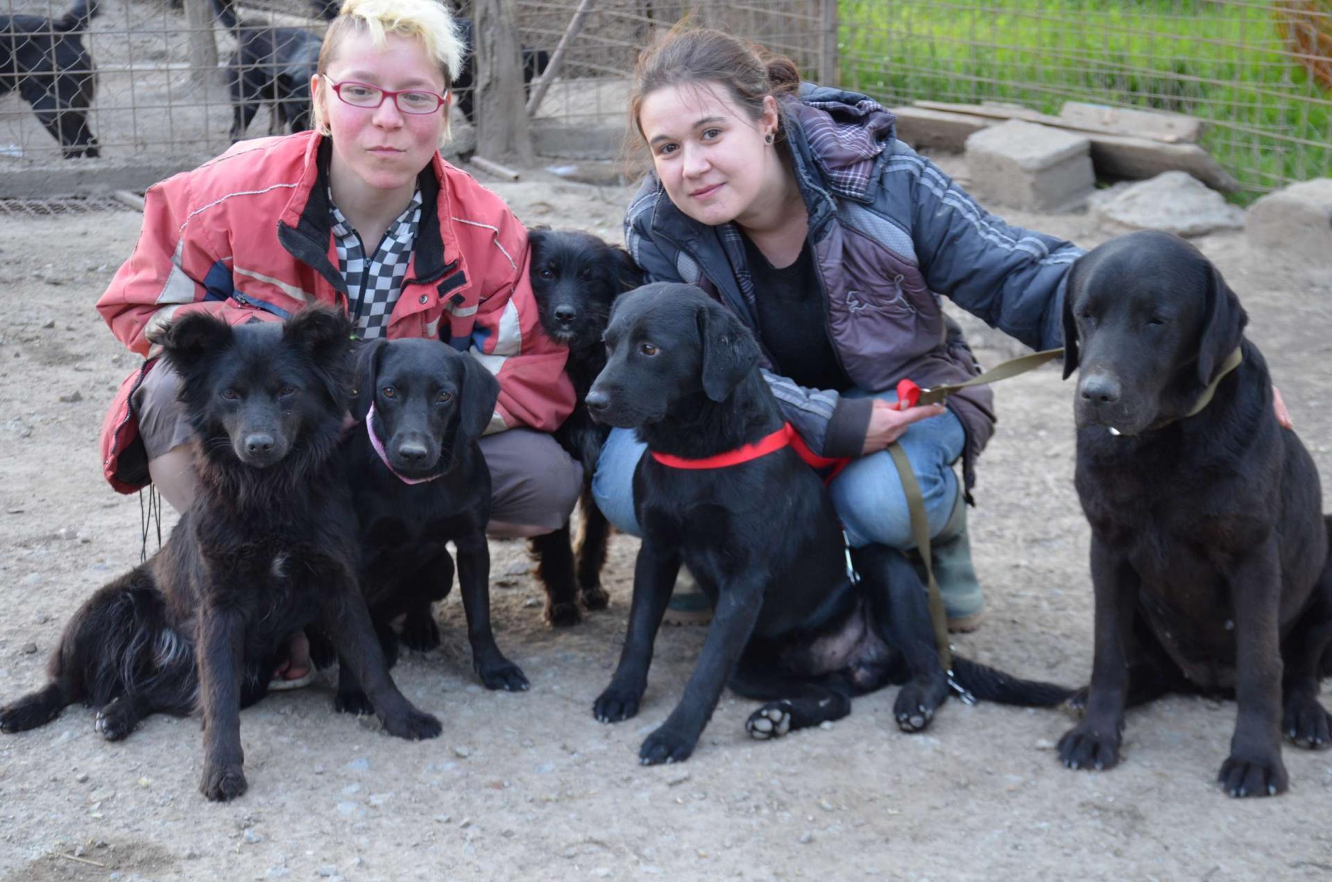 Black dogs 11 b