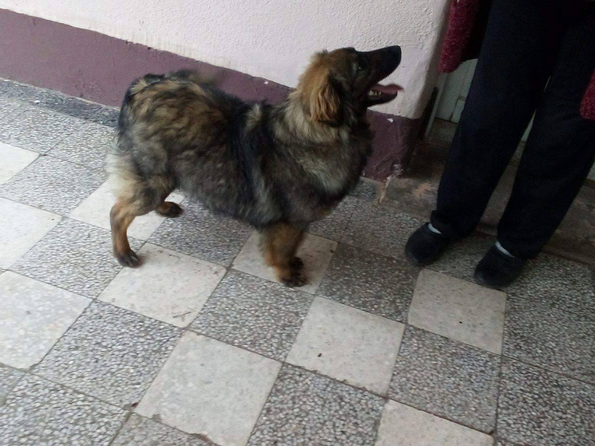 Cuki adopted 3