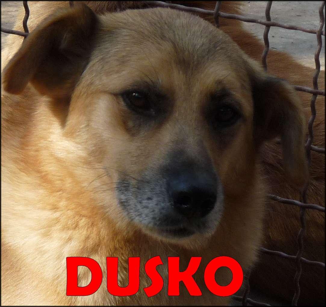 Dusko 10 1