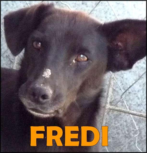 Fredi 1