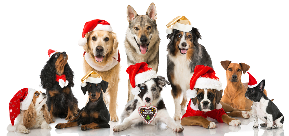 Noel chiens 1