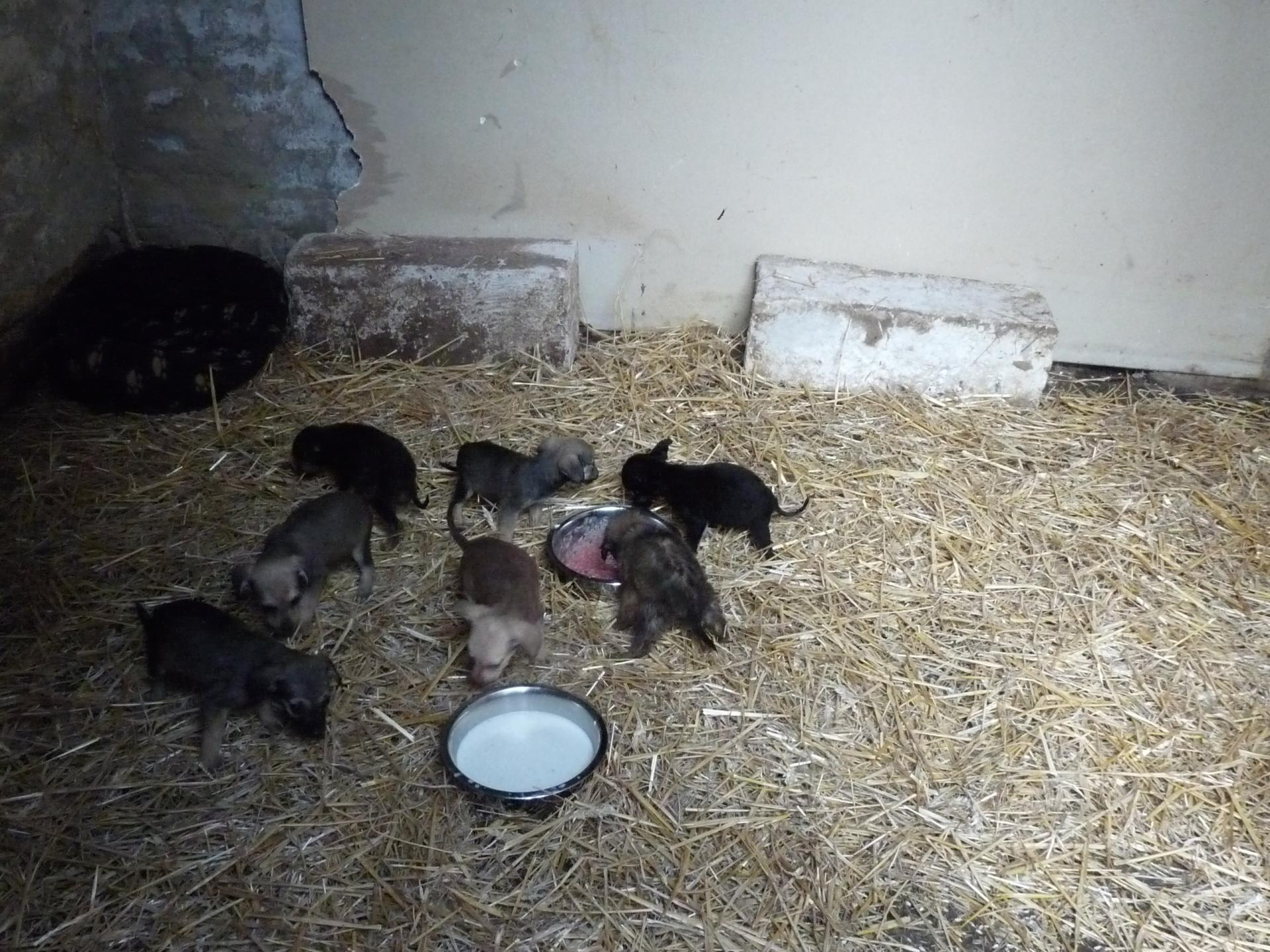 Puppies 22