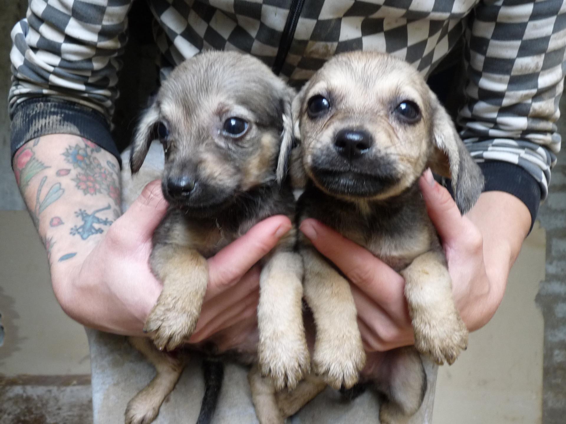 Puppies 47