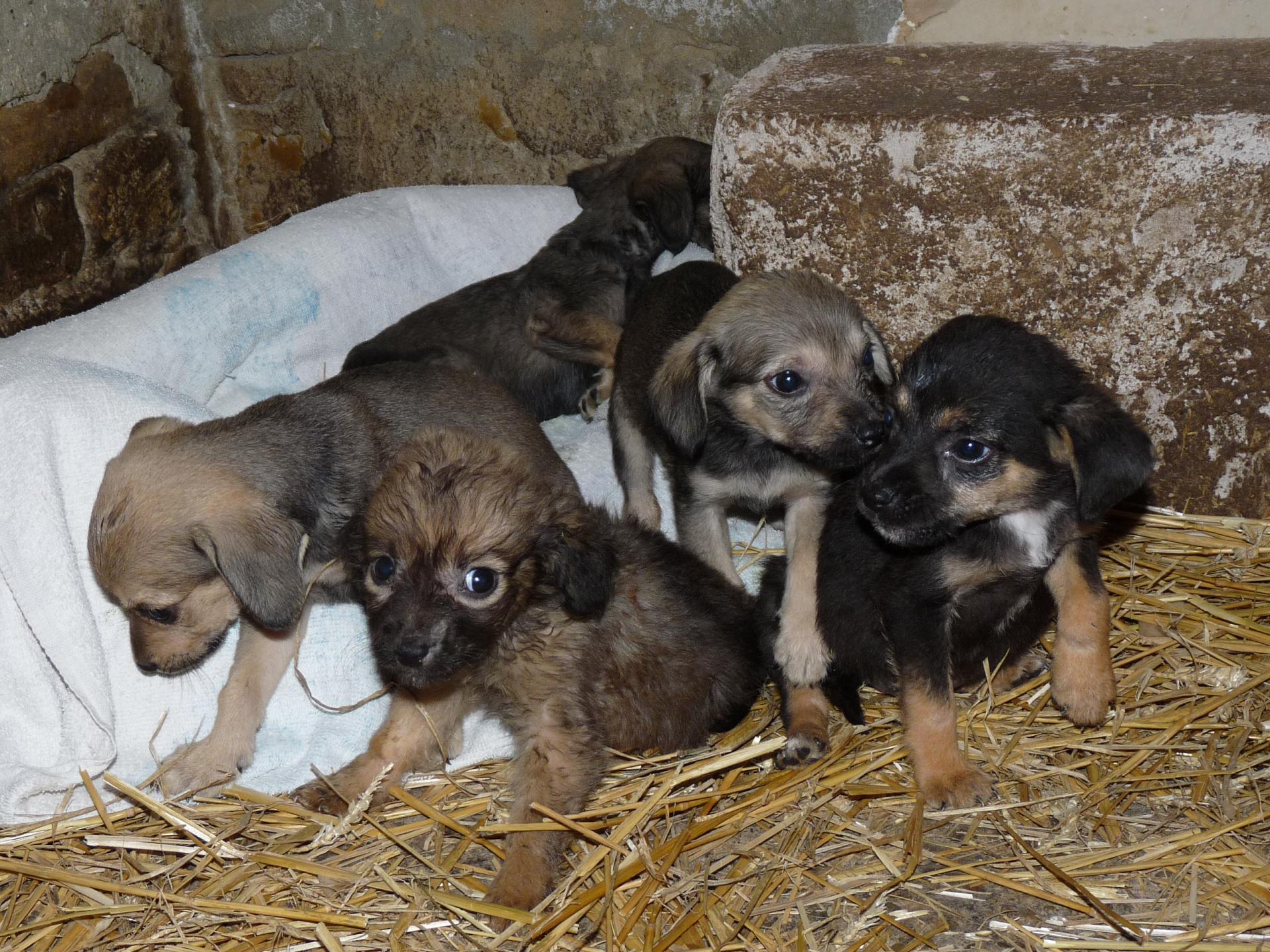 Puppies 75