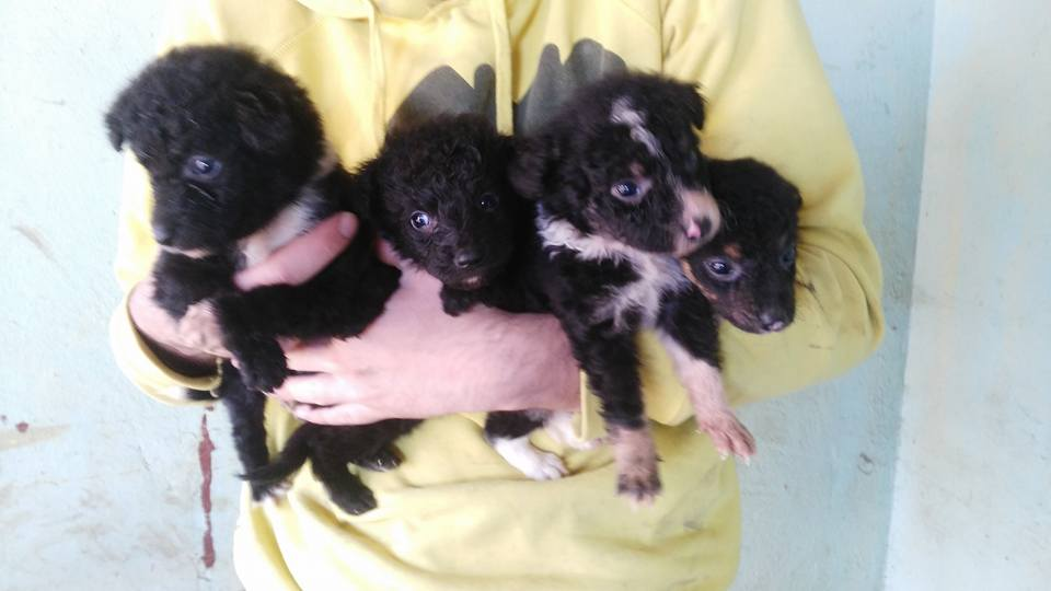 Puppies b w