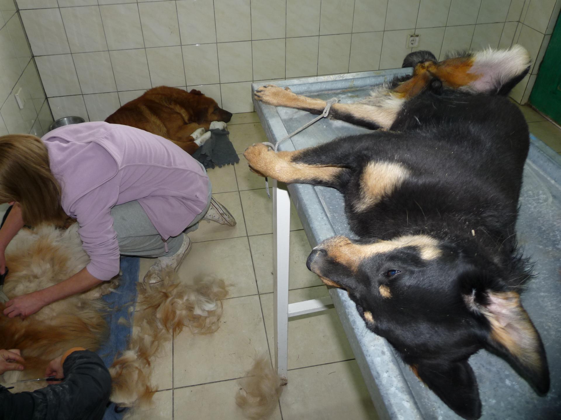 Sterilisation 20