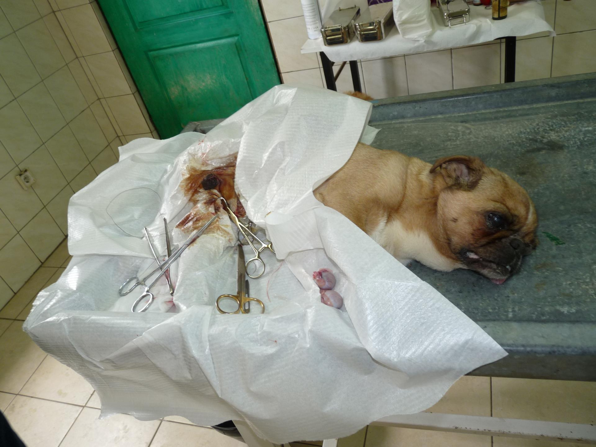 Sterilisation 9
