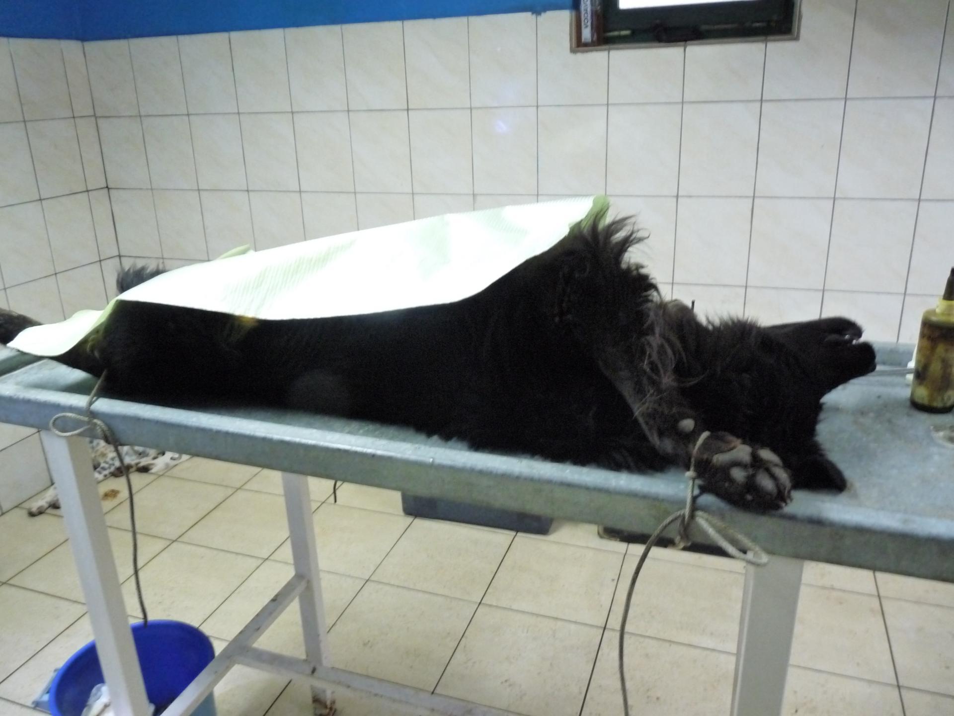 Sterilisation nasha
