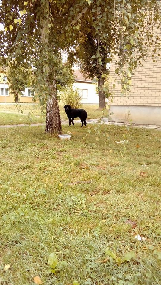 Street dog 5