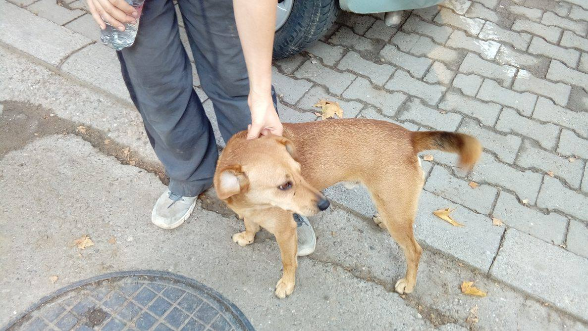 Street dog 9