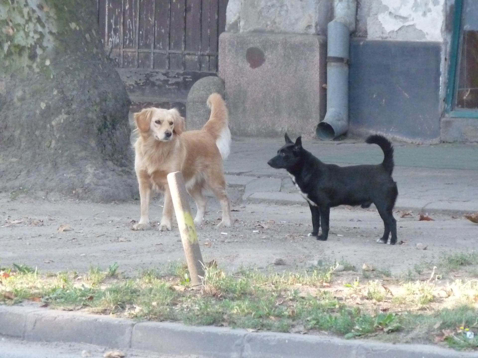 Street dogs 5