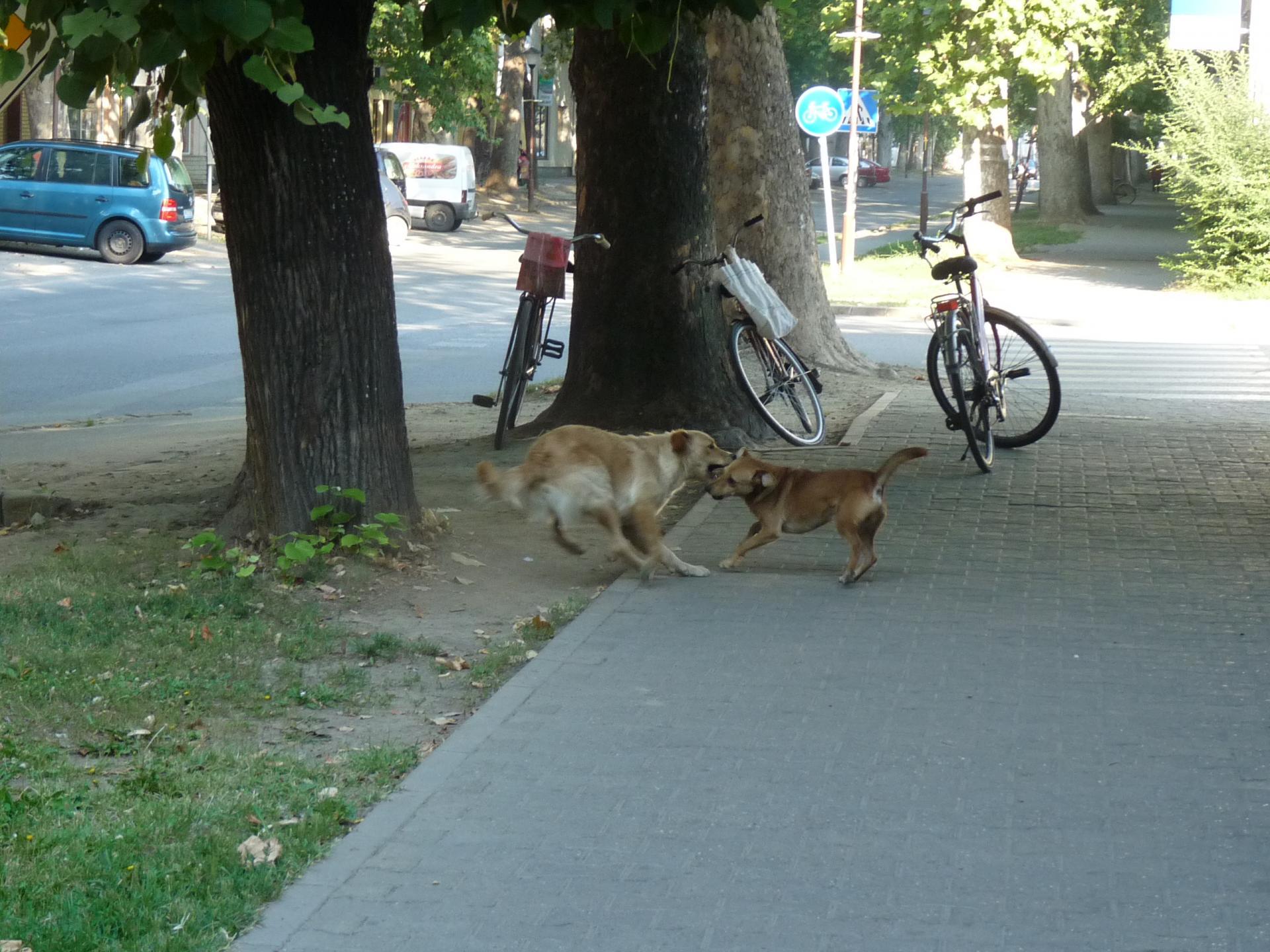 Street dogs 6