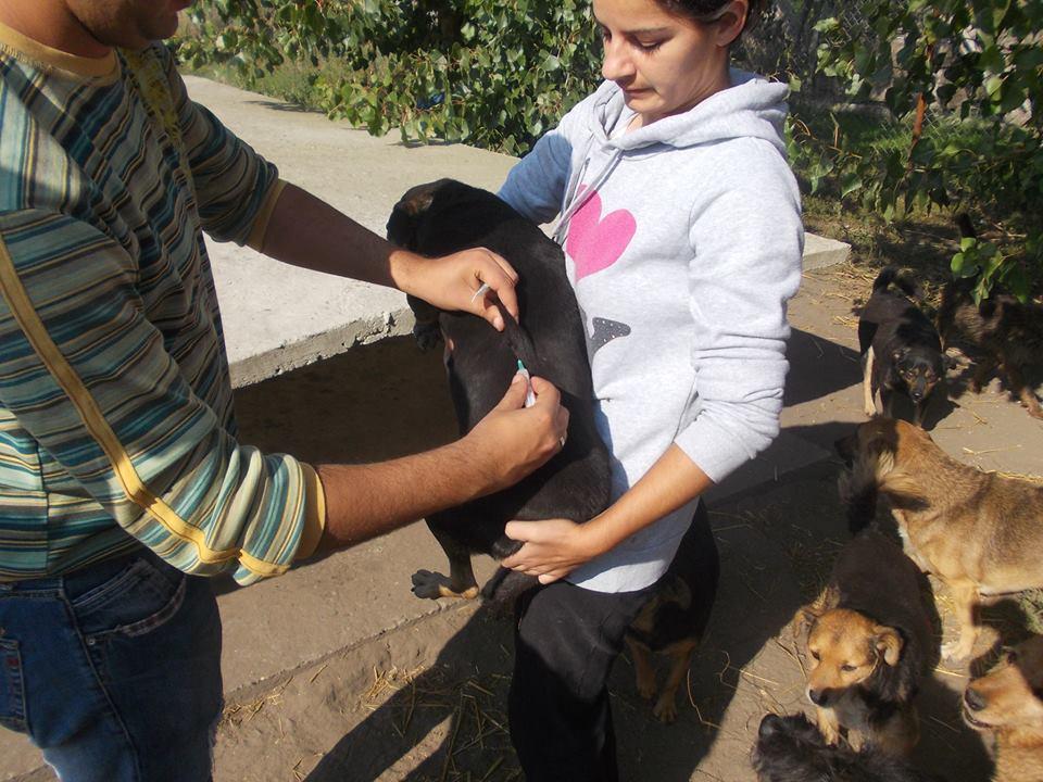 Vaccination 7